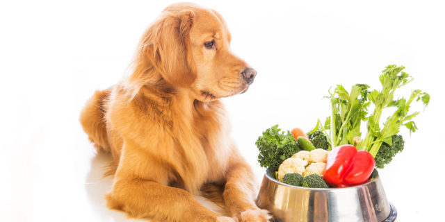 Holistic Joint Health for Dogs - Herbs and Supplements