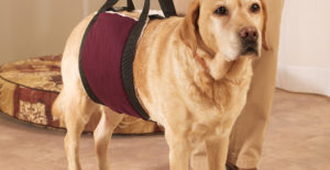 5 Best Slings and Lift Harnesses for Dog Knee Injuries