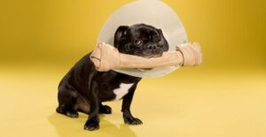 6 Cones and Collars for Dogs Post Surgery and Injury Recovery